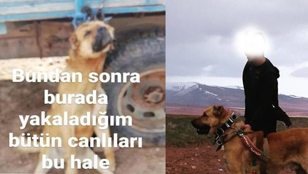 Köpeği Römorka Asan Hayvan Gözaltına Alındı