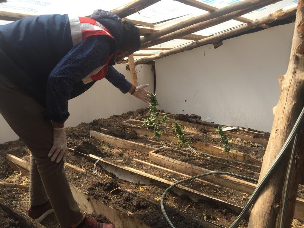 Evinin Çatısında Esrar Yetiştiren 1 Kişi Tutuklandı